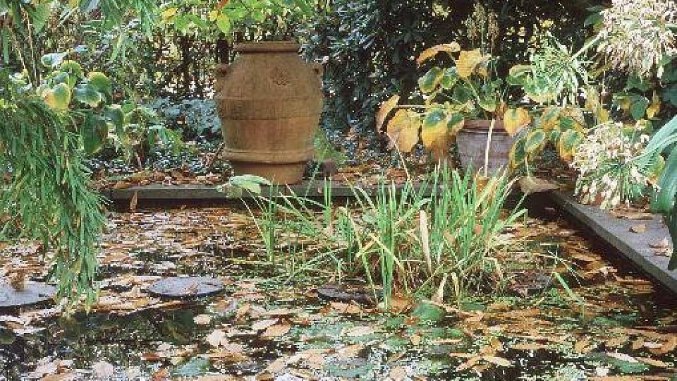 Winterharte Balkonpflanzen: Blütenmeer In Herbst Und Winter
