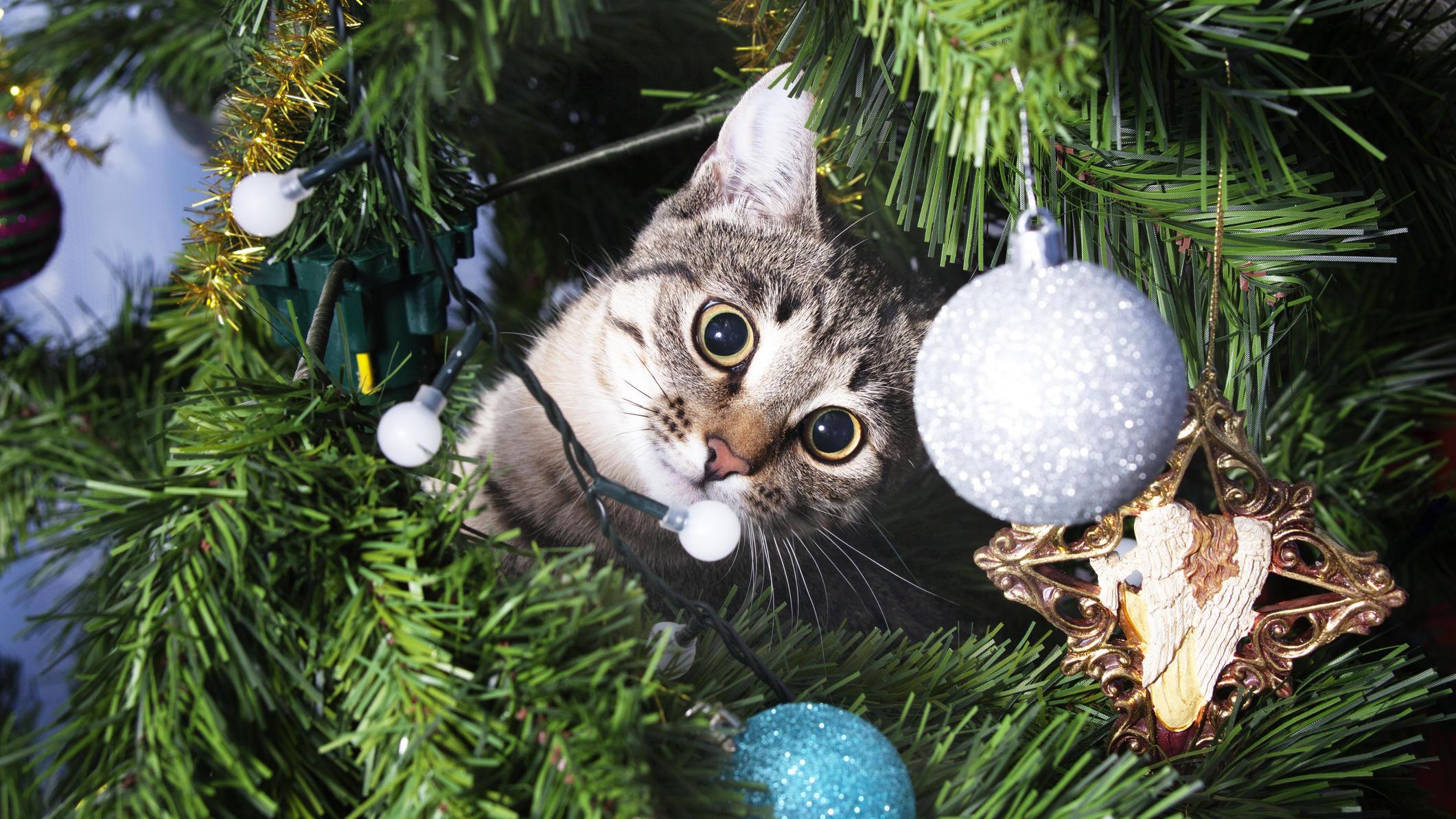 Weihnachten mit Haustieren: So machen Sie Ihren Tannenbaum