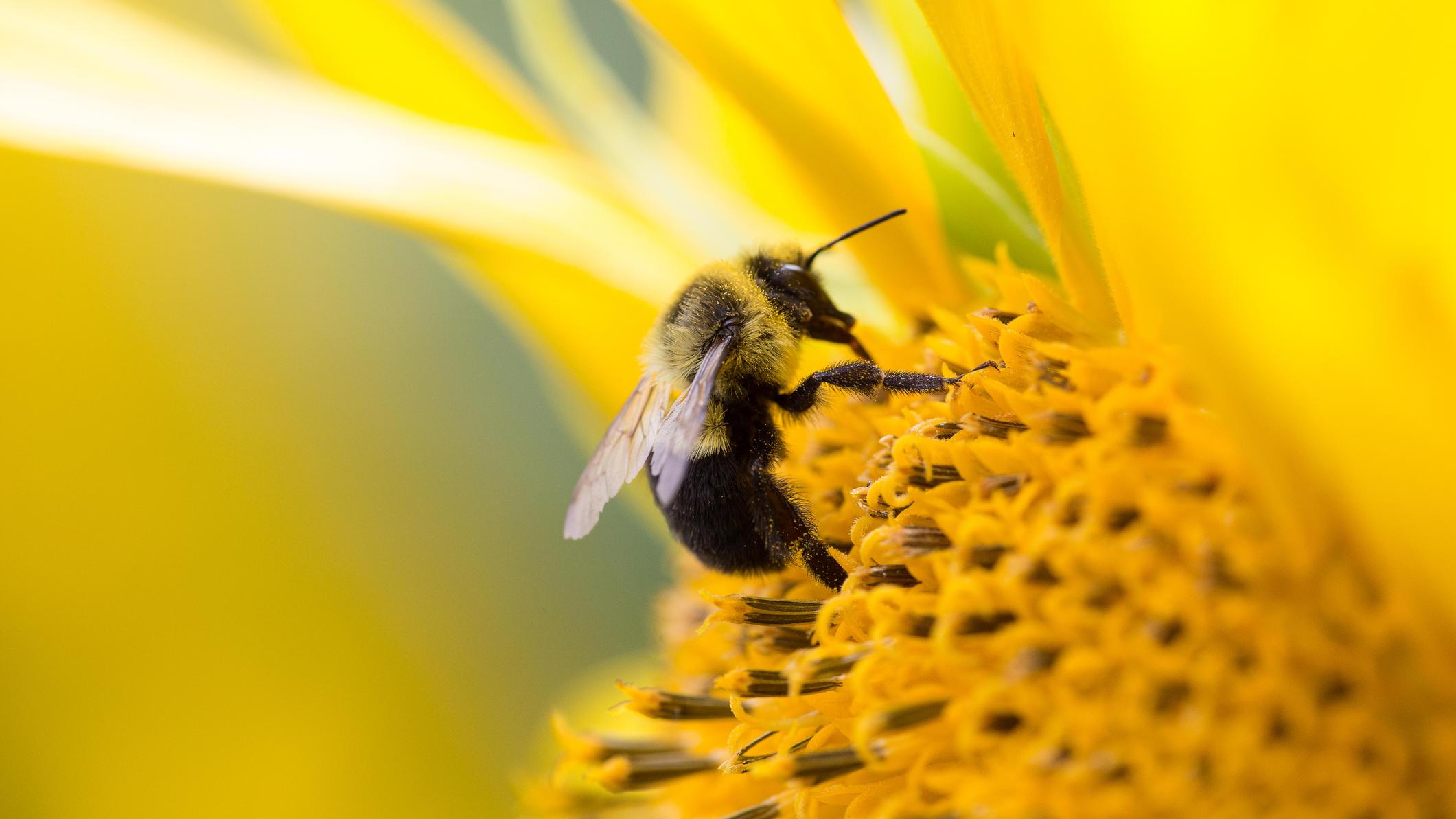 So einfach machen Sie Vorgarten oder Balkon zum Bienenpara s