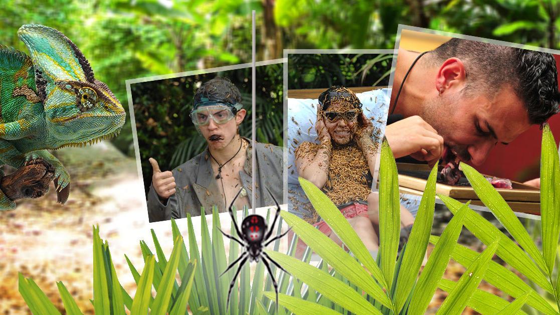 Dschungelcamp 2019 Mythen Und Fakten Zum Dschungel