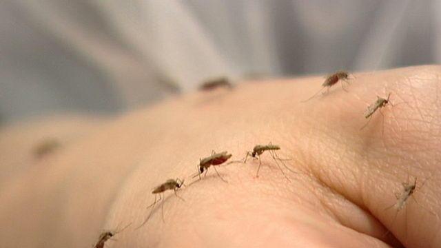 Mücken Süßes Blut