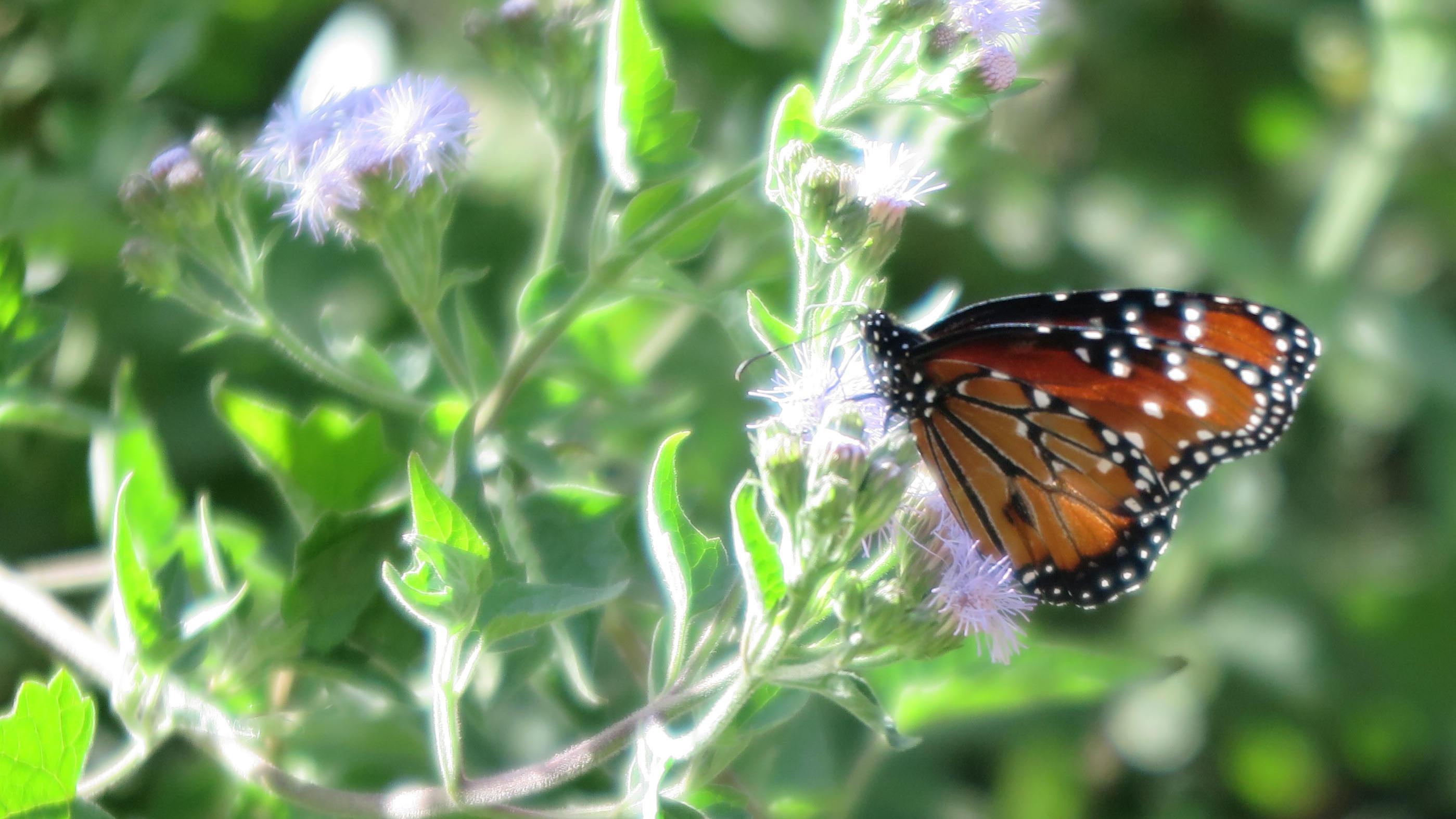 Keine Schmetterlinge aus