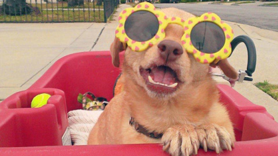 Susses Geburtstagsvideo Fur Einen Behinderten Hund